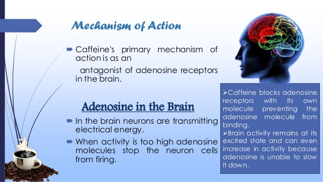 The mechanism of action of caffeine